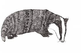 Image of a Badger.