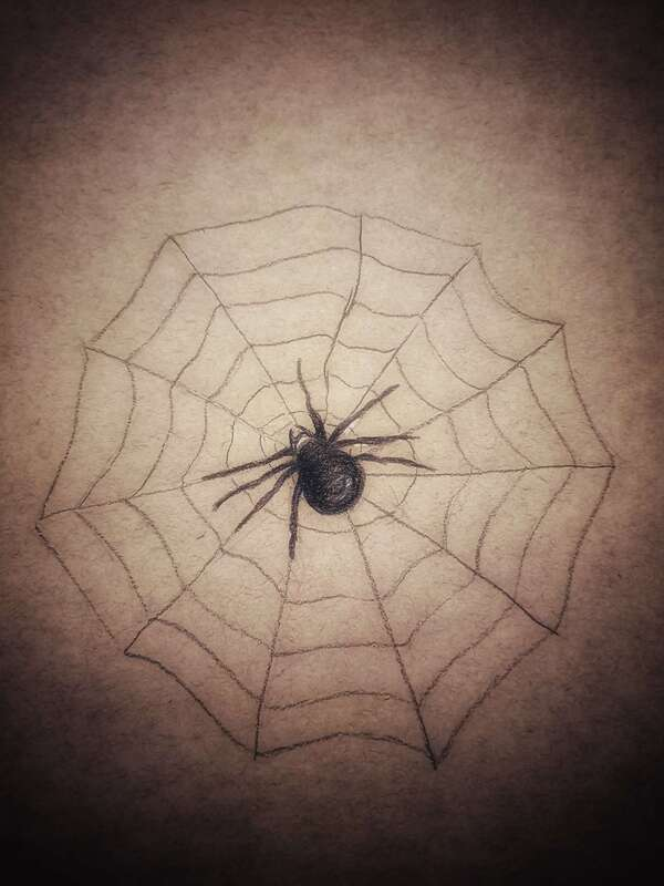 Image of a spider.