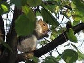 Image of a Squirrel.