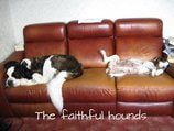 Image of a pair of dogs asleep on a sofa